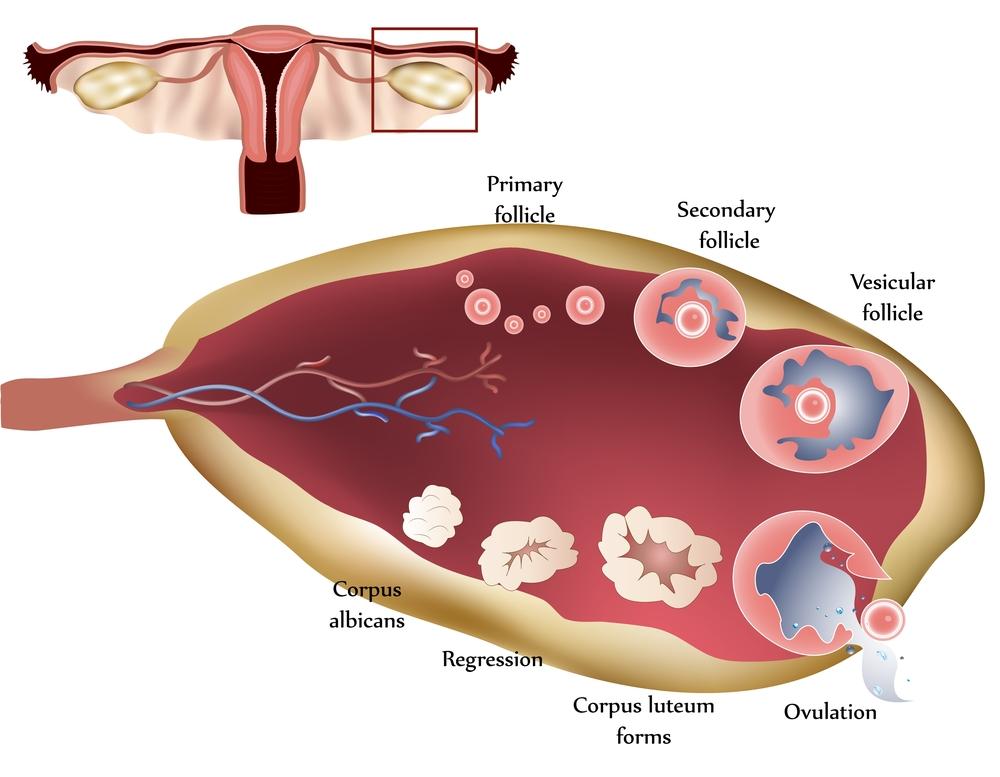 ovulation problem