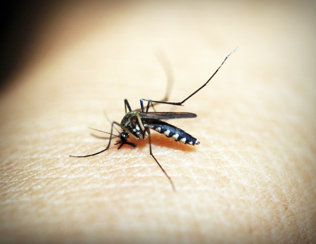 Insect Stings Allergy